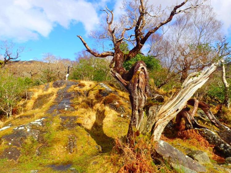 killarney-natl-park